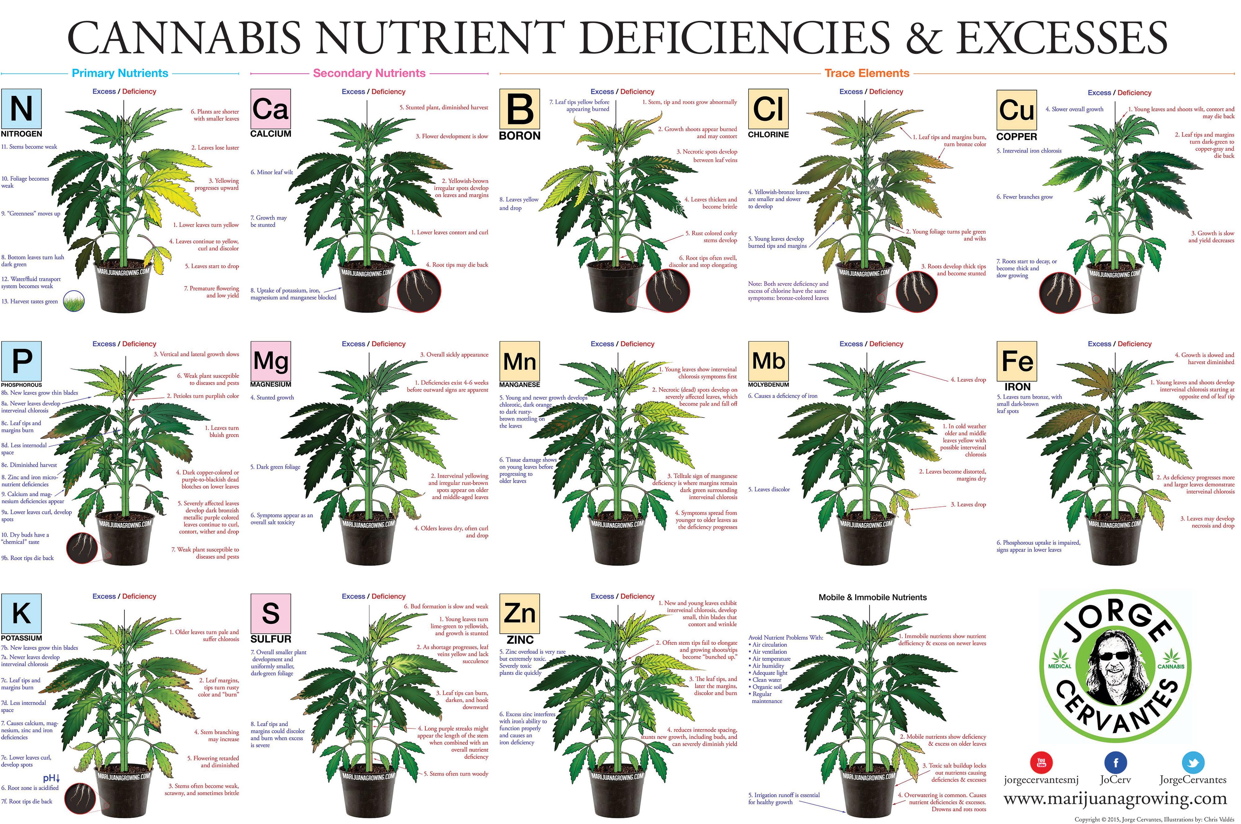 tabla de carnecias y excesos marihuana y cannabis